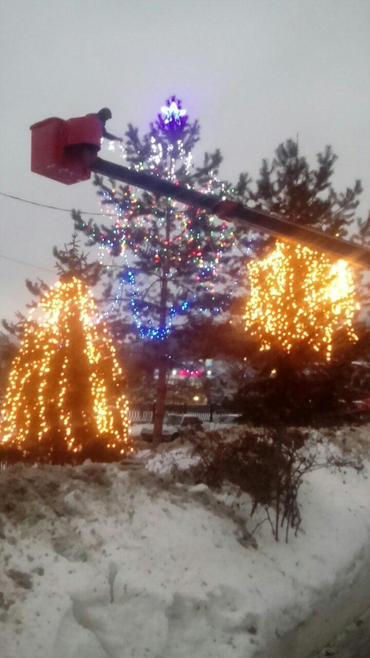 Ёлки у Армады, фото: Настя Токарева